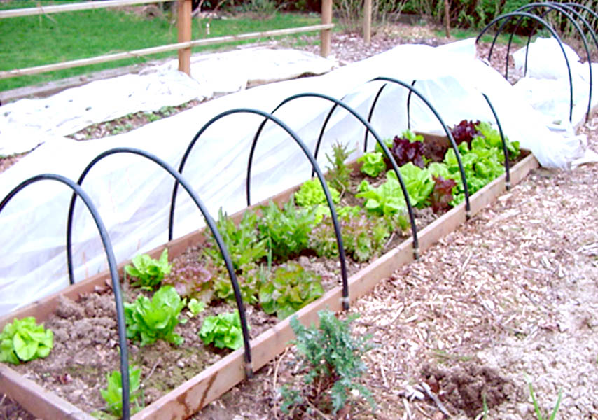 Raised bed with hoopsjpg 854600 Garden Pinterest